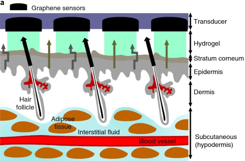 grafica plasture pentru masurarea glicemiei